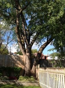 my big tree photo