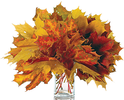 autumn-leaves-in-a-vase