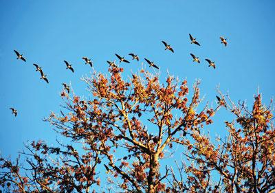 BirdsFlyingSouth