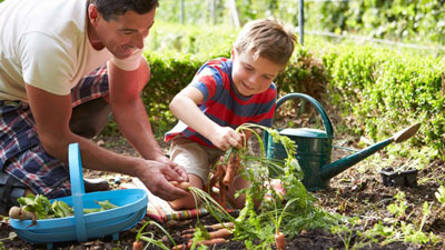 father-son-harvesting-carrots-on-allotment-918x516