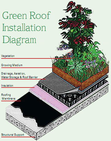 Green Roof Installation Diagram
